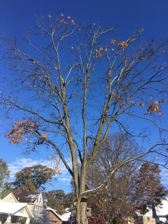 fall tree-1