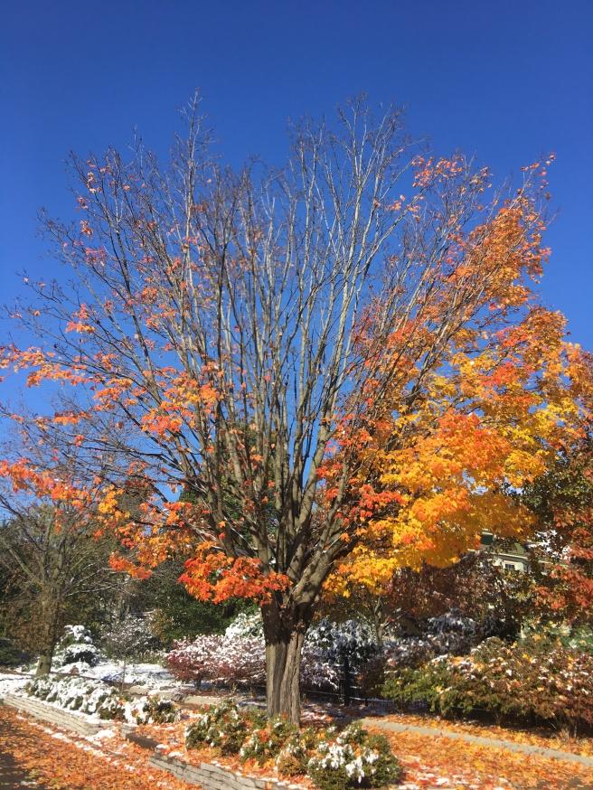 fall tree-2