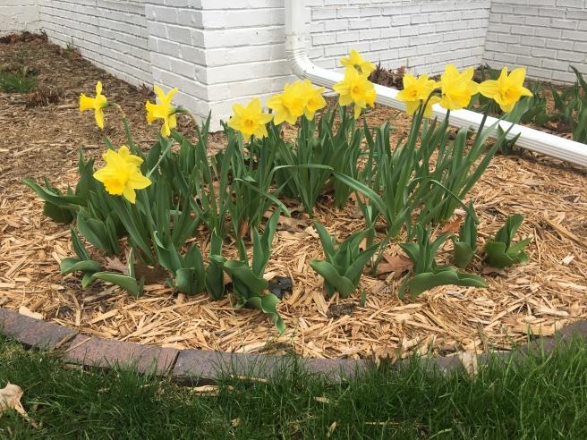 Spring flowers--Janice