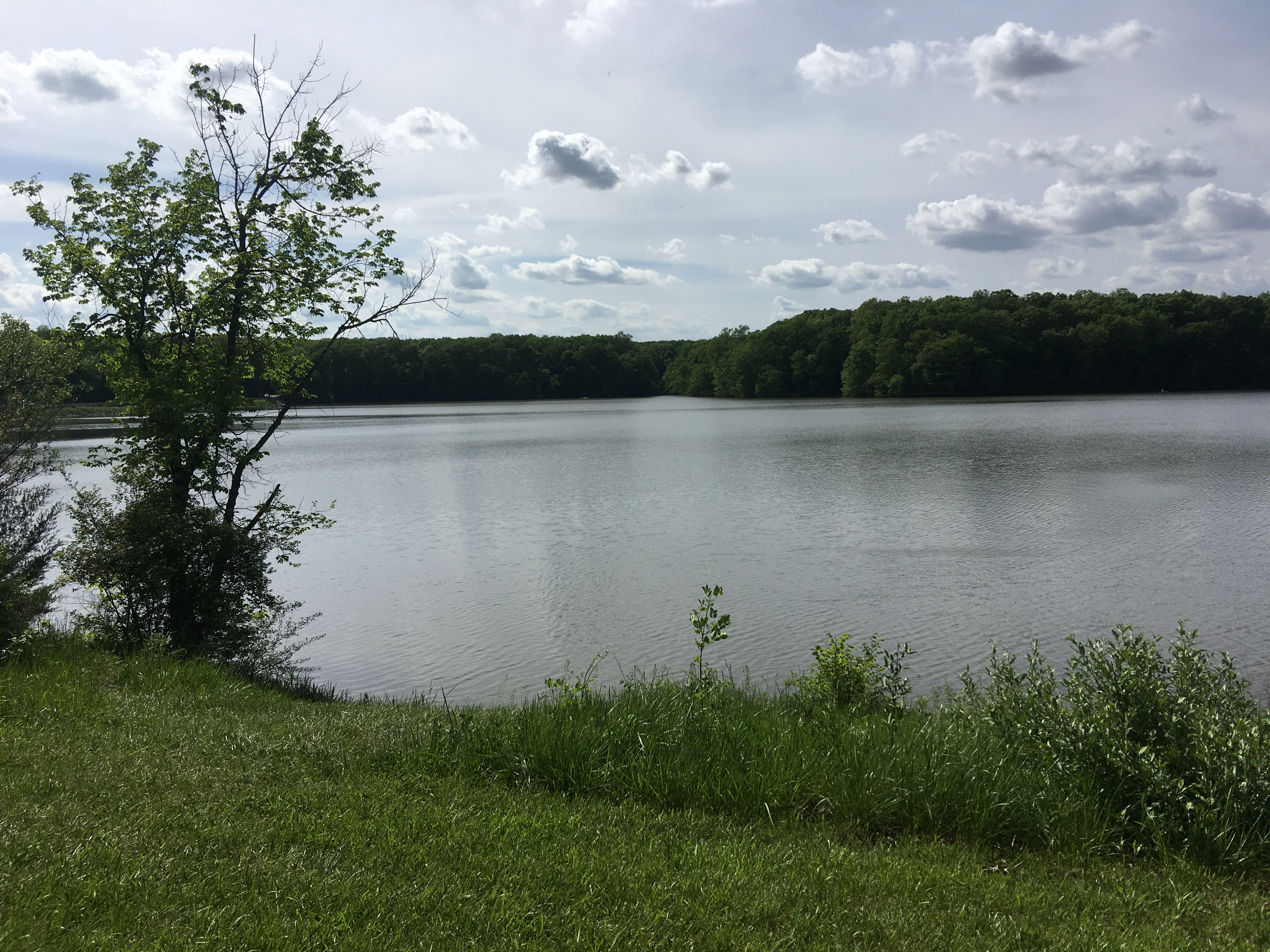Lake Bloomington-2
